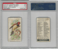 E30 Philadelphia, Zoo Cards, Song Birds, 1907, Black Breasted Barbet, PSA 3 VG