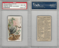 N20 Allen & Ginter, Prize & Game Chickens, 1892, Guinea Fowl, PSA 6 EXMT
