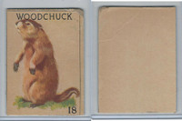 R15-2 Schranz & Beiber Co., Animals, 1930's, #18 Woodchuck