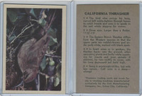 R724-2 Oak M., Premiere Trading Cards-Birds, 1957,  California Thrasher