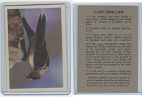 R724-2 Oak M., Premiere Trading Cards-Birds, 1957,  Cliff Swallow