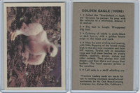 R724-2 Oak M., Premiere Trading Cards-Birds, 1957,  Golden Eagle
