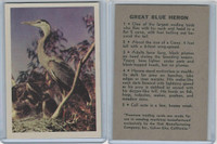 R724-2 Oak M., Premiere Trading Cards-Birds, 1957,  Great Blue Heron