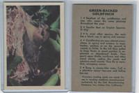 R724-2 Oak M., Premiere Trading Cards-Birds, 1957,  Green-Backed Goldfinch