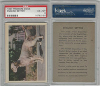 R724-4 Oak M., Premiere Trading Cards-Dogs, 1957,  English Setter, PSA 6 EXMT