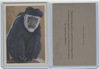 R724-6 Oak M., Premiere Trading -Animals, 1957,  Colobus Monkey