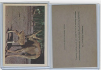 R724-6 Oak M., Premiere Trading -Animals, 1957,  Common Eland & Baby