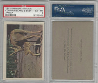 R724-6 Oak M., Premiere Trading -Animals, 1957,  Common Eland, PSA 6 EXMT