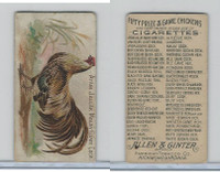 N20 Allen & Ginter, Prize & Game Chickens, 1892, Ayam Jallak Malay GC