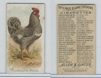 N20 Allen & Ginter, Prize & Game Chickens, 1892, Plymouth Rock