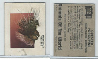 1951 Topps, Animals of the World, #112 Crested Porcupine