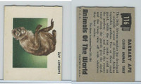 1951 Topps, Animals of the World, #116 Barbary Ape