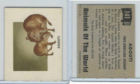 1951 Topps, Animals of the World, #141 Agouti