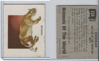 1951 Topps, Animals of the World, #154 Cougar