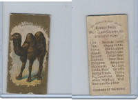 N216 Kinney Cigarettes, Animals, 1890, Bactrian Camel