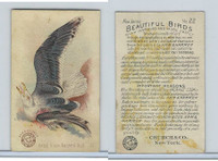 J2, Church & Dwight, Beautiful Birds New Series, 1896, #22 Great Black B Gull