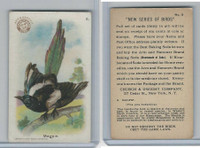 J4, Church & Dwight, New Series of Birds, 1908, #6 Magpie