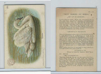 J4, Church & Dwight, New Series of Birds, 1908, #20 Swan