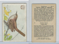 J7, Church & Dwight, Useful Birds America 3rd Ser., 1922, #10 House Wren