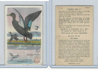 J8, Church & Dwight, Useful Birds America 4th Ser., 1924, #2 Black Duck