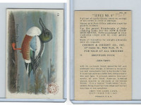 J8, Church & Dwight, Useful Birds America 4th Ser., 1924, #13 Shoveller Duck
