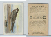 J9-1, Church & Dwight, Useful Birds America 5th Ser., 1925, #9 Nighthawk
