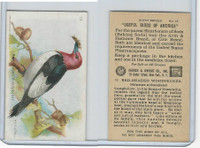 J9-2, Church & Dwight, Useful Birds America 6th Ser., 1925, #13 Red-h Woodpecker