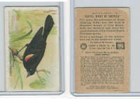 J9-3, Church & Dwight, Useful Birds America 7th Ser., 1925, #7 Red-w Black Bird
