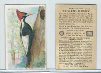 J9-3, Church & Dwight, Useful Birds America 7th Ser., 1925, #15 I.B. Woodpecker