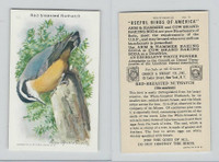 J9-6, Church & Dwight, Useful Birds America 10th Ser., 1925, #12 Red-b Nuthatch
