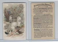 J10, Church & Dwight, Interesting Animals, 1897, #21 Ermine