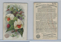 J16, Church & Dwight, Beautiful Flowers, 1895, #53 Abutilon