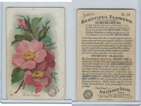 J16, Church & Dwight, Beautiful Flowers, 1895, #54 Wild Roses