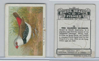 C1 Imperial Tobacco, Birds, Beasts, & Fishes, 1923, #12 Diamond Sparrow