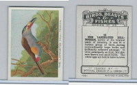 C1 Imperial Tobacco, Birds, Beasts, & Fishes, 1923, #13 Laminated Toucan