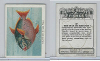 C1 Imperial Tobacco, Birds, Beasts, & Fishes, 1923, #27 Opah Or King Fish