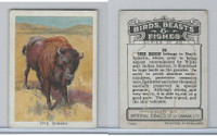 C1 Imperial Tobacco, Birds, Beasts, & Fishes, 1923, #35 Bison