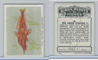 C1 Imperial Tobacco, Birds, Beasts, & Fishes, 1923, #38 Armed Gurnard