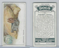 C8 Imperial Tobacco Company, Dog 2nd Series, 1920's, #48 Yorkshire Terrier