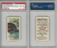 D8 Weber Baking, Animal Pictures, 1920, Duck-Billed Platypus, PSA 6 EXMT