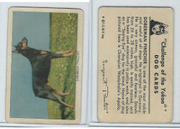 F279-5 Quaker, Challenge of the Yukon, Dog Cards, 1950, Doberman Pinscher