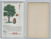 F213-3 Coca Cola, Nature Study, Trees & Plants, 1920's, #10 Oak
