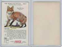 F213-3 Coca Cola, Nature Study, Wild Animals, 1920's,  #1 Red Fox