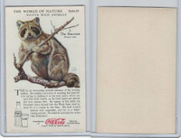 F213-3 Coca Cola, Nature Study, Wild Animals, 1920's,  #2 Raccoon
