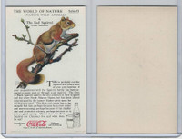 F213-3 Coca Cola, Nature Study, Wild Animals, 1920's,  #4 Red Squirrel