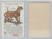 F213-3 Coca Cola, Nature Study, Wild Animals, 1920's,  #12 Panther