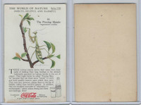 F213-3 Coca Cola, Nature Study, Insects, 1920's, #10 Praying Mantis