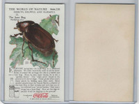 F213-3 Coca Cola, Nature Study, Insects, 1920's, #11 June Bug