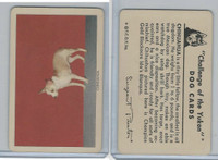 F279-5 Quaker, Challenge of the Yukon, Dog Cards, 1950, Chihuahua
