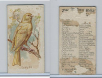 N23 Allen & Ginter, Song Birds of the World, 1890, Canary Bird